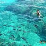 Clear Water in Key Largo Yacht Charter