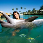 Swim with Dolphins in Hawks Cay