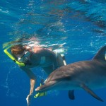 Yacht Charter to Swim with Dolphins